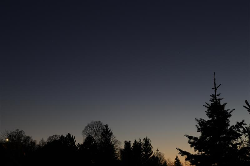 Clear sky at night with spruce silhouette