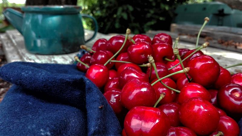 Ripe cherries on the table