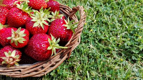 Basket full of strawberries on the grass
