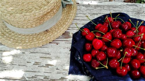 Ripe cherries lying beside a straw hat
